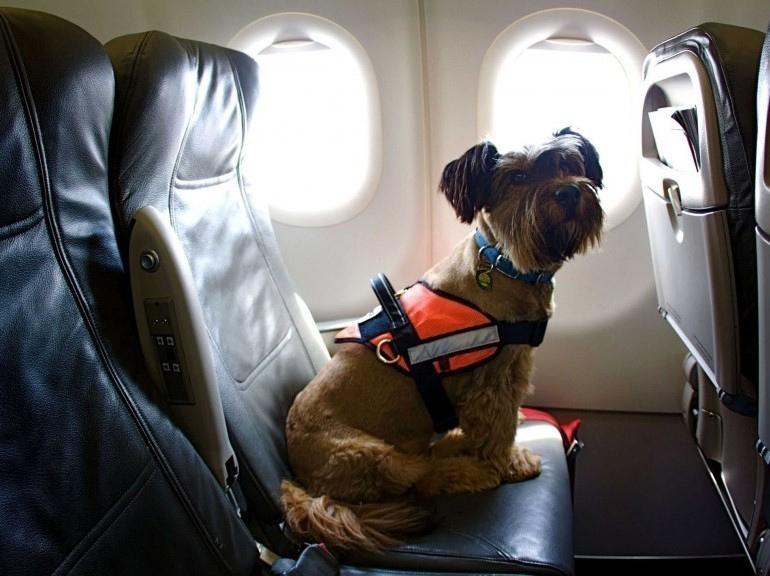 Перед WORLD DOG SHOW 2016 снижены тарифы на перевозку животных